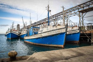 Fishing Boats in Cape Town