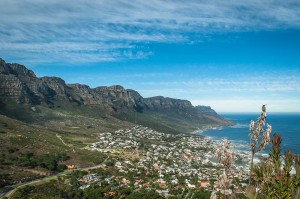 Camps Bay and sunbird